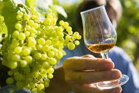 vignes + cognac